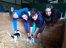 Meeting-the-puppies-at-Muckross-farm